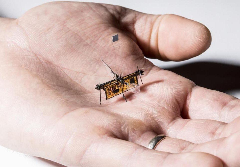 نخستین حشره رباتیک